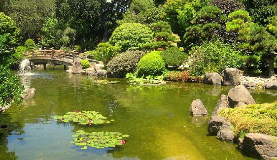 Japanese Tea Garden, San Mateo, California, USA.