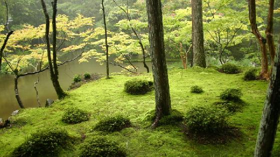 The famous moss garden of Saiho-ji, Kyoto, Japan.