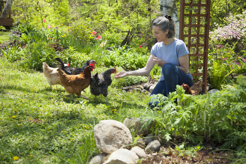 Woman feeding free range chickens in her garden (Photo - © Edward J Bock 111 | Dreamstime.com)